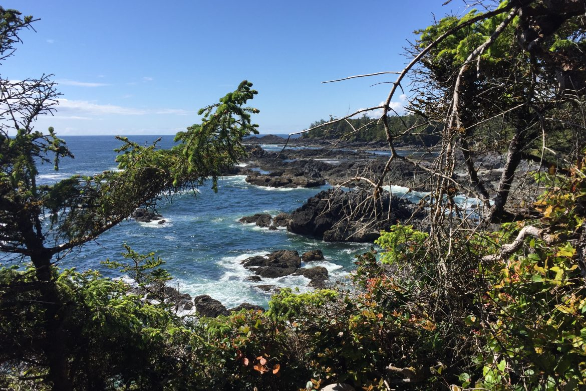 Wild coast with black rocks, trees and ocean.